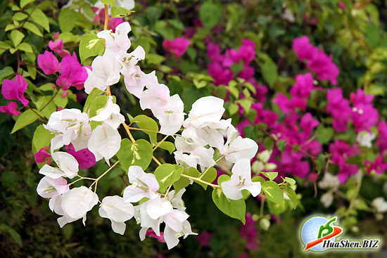 Фото редких садовых цветов