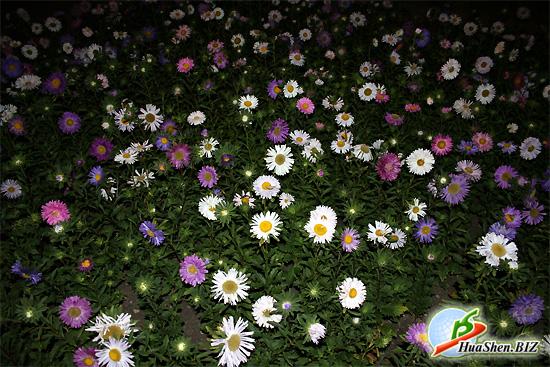 На рабочий стол цветы в парке